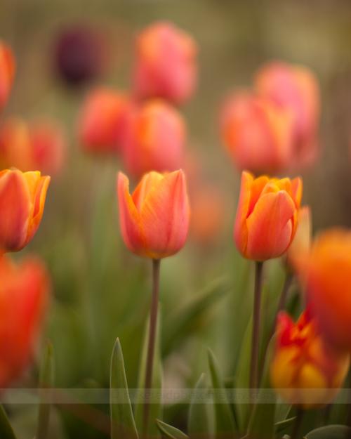 Flowers in the 'Hood