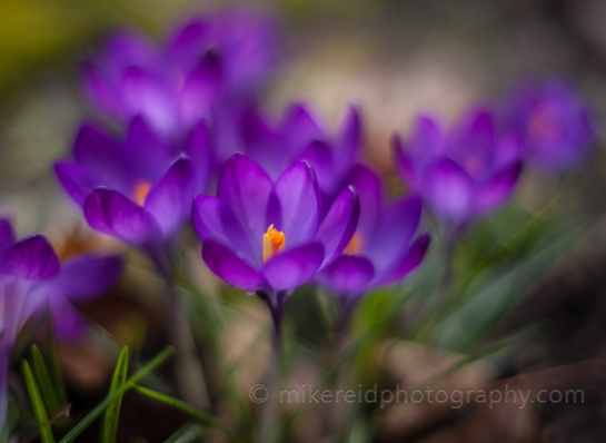 Delicate Colors of Spring