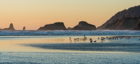 cannon beach coastal birds