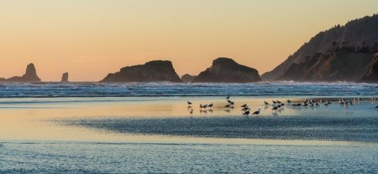 cannon beach coastal birds
