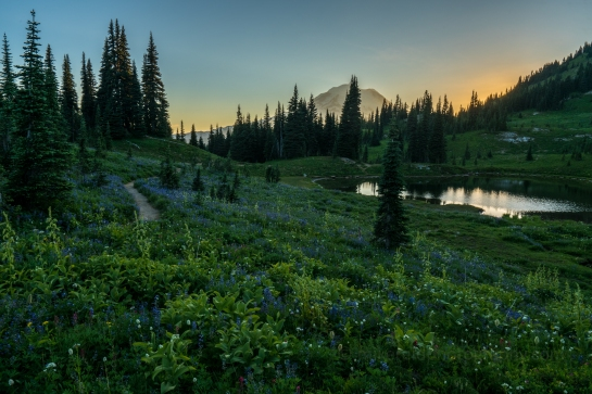 Mount Rainier Naches Loop Wildflowers