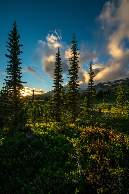 Rainier Lenticular Cloud and Wildflowers at Sunset