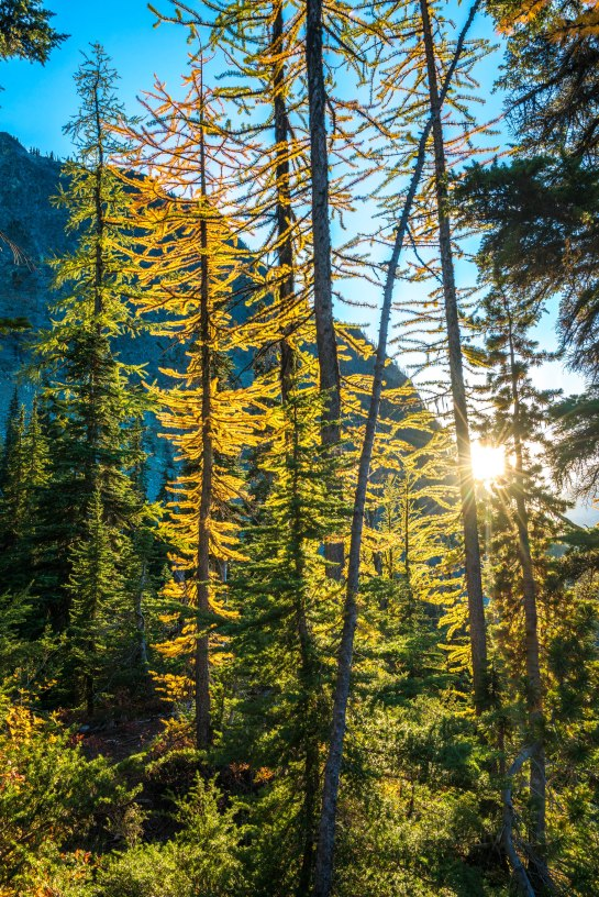 Washington State Fall Colors Larches Photography
