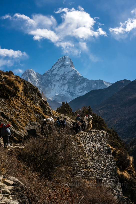 Yak Train Along the Trail Past Ama Dablam Nepal Trekking to Everest Base Camp