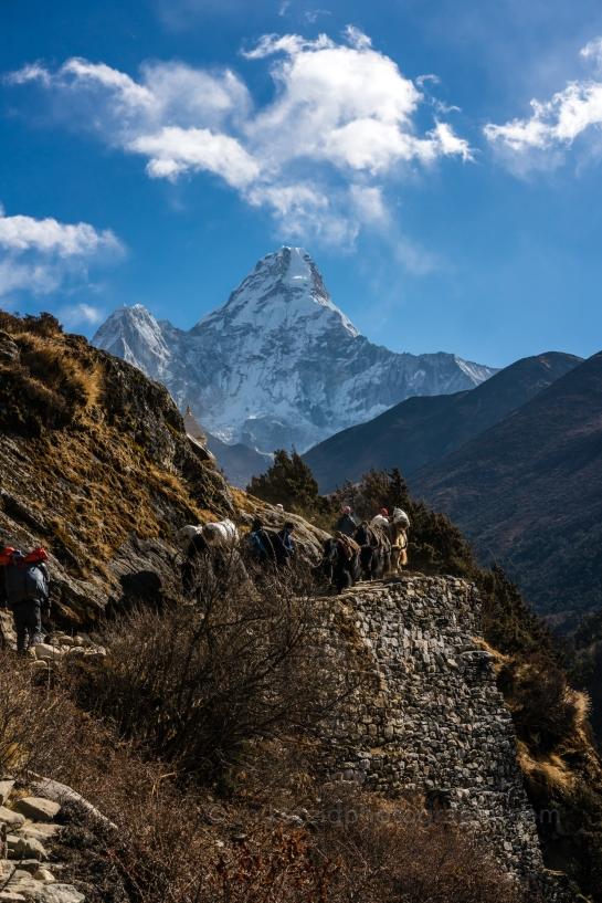 Yak Train Along the Trail Past Ama Dablam Nepal Trekking to Everest Base Camp