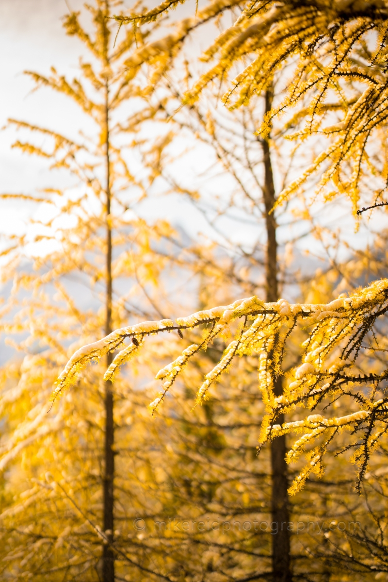 Golden Fall Colors Bokeh Zeiss 85mm Otus