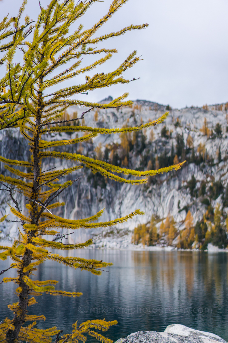 Golden Larches and Lake Vivianne Enchantments. Sony a7r2 and Zeiss 55/1.8