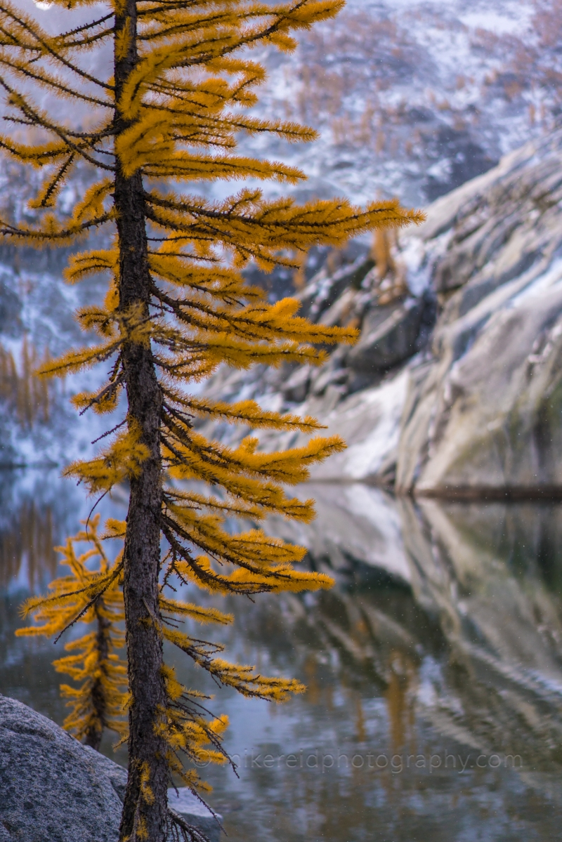 Golden Fall Colors Larch Closeup Bokeh Zeiss 55/1.8 and Sony a7r2 Enchantments