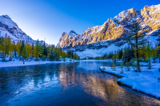 Mount Schaffer Catching Morning Light Above Lake Opabin and Golden Fall Colors