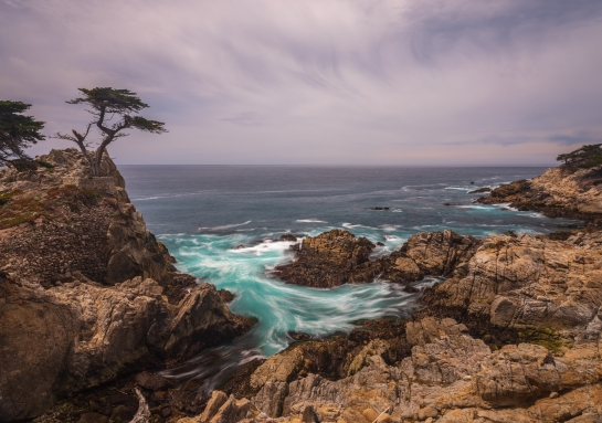 The Lone Cyprus Along the 17 Mile Drive in Pebble Beach - GF 23mm lens on Fuji GFX50s