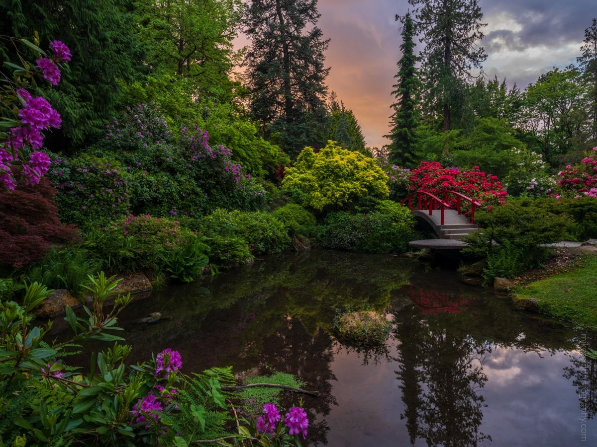 Seattle's Kubota Gardens Spring Sunset Fuji GFX50s and GF23mm lens