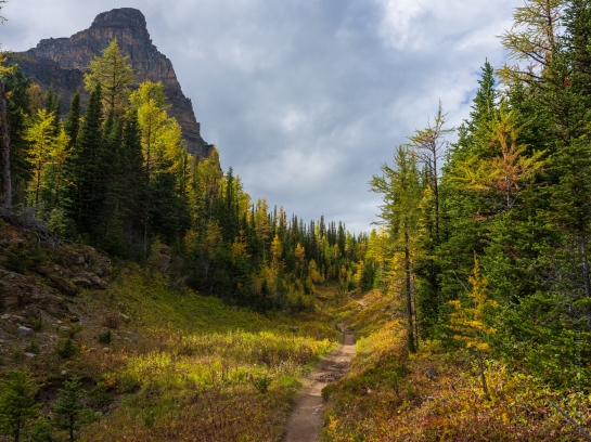 Trail Through the Larches Past Sunburst Peak