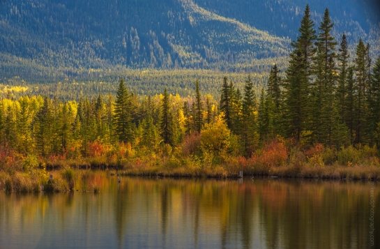 Vermillion Lakes Fall Colors Canon 200mm f/1.8 and GFX50s